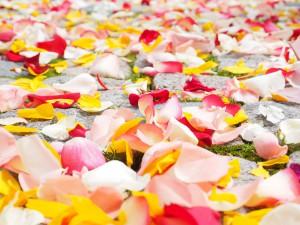 rose-petals-693570_1920